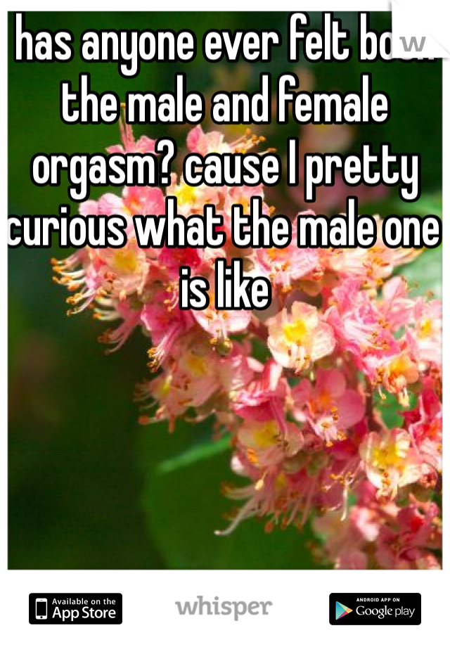 has anyone ever felt both the male and female orgasm? cause I pretty curious what the male one is like