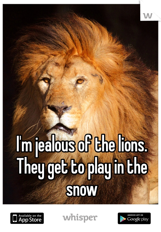 I'm jealous of the lions. They get to play in the snow