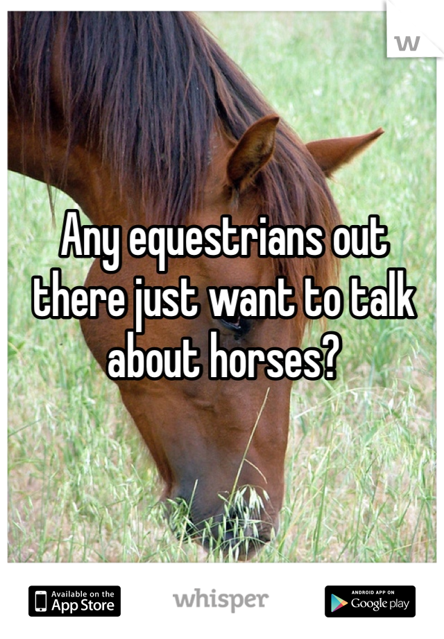 Any equestrians out there just want to talk about horses?