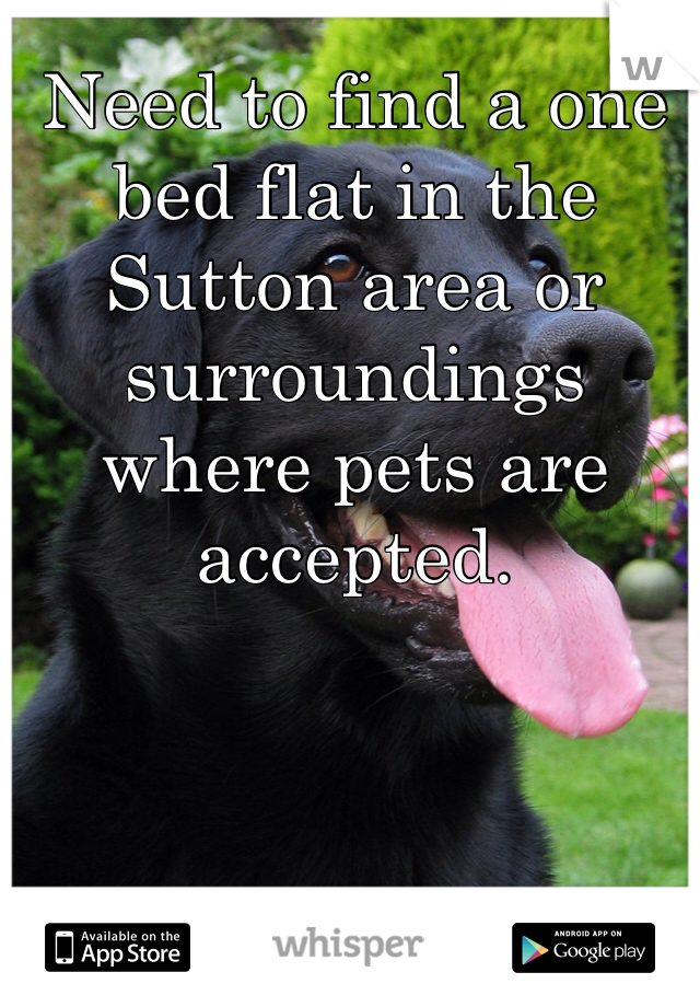 Need to find a one bed flat in the Sutton area or surroundings where pets are accepted.