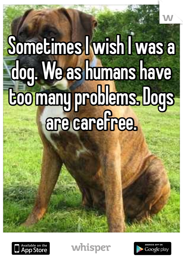 Sometimes I wish I was a dog. We as humans have too many problems. Dogs are carefree.