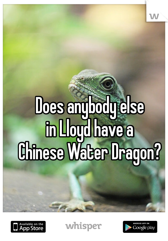 Does anybody else  in Lloyd have a  Chinese Water Dragon?