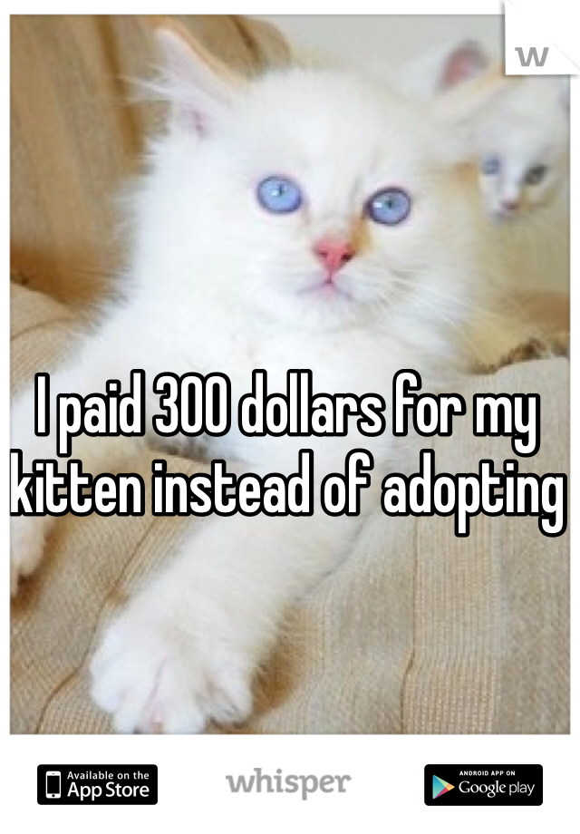 I paid 300 dollars for my kitten instead of adopting