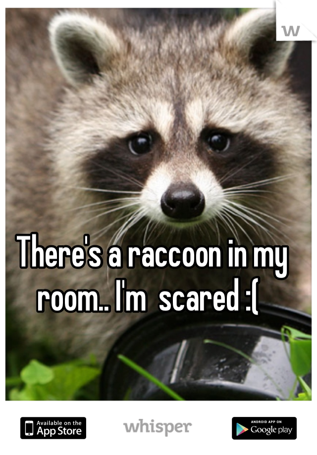 There's a raccoon in my room.. I'm  scared :(
