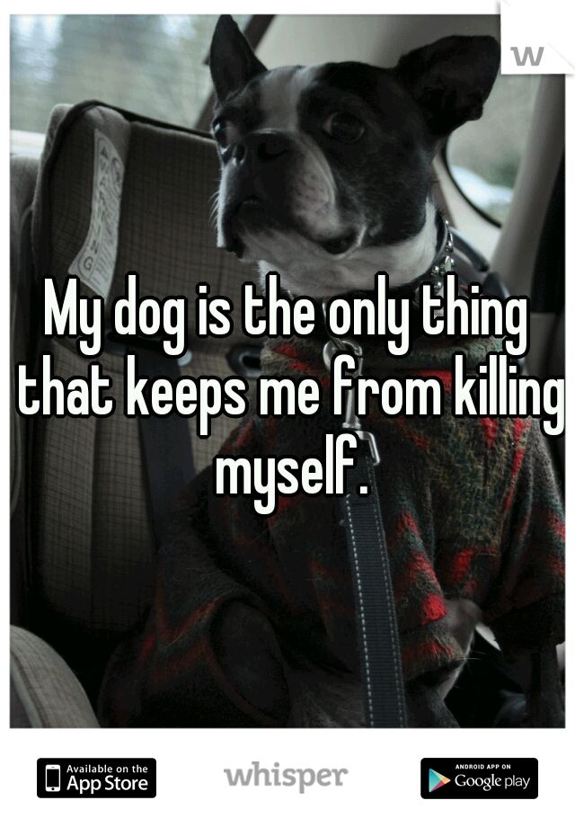 My dog is the only thing that keeps me from killing myself.