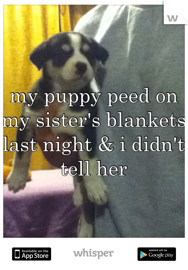 my puppy peed on my sister's blankets last night & i didn't tell her