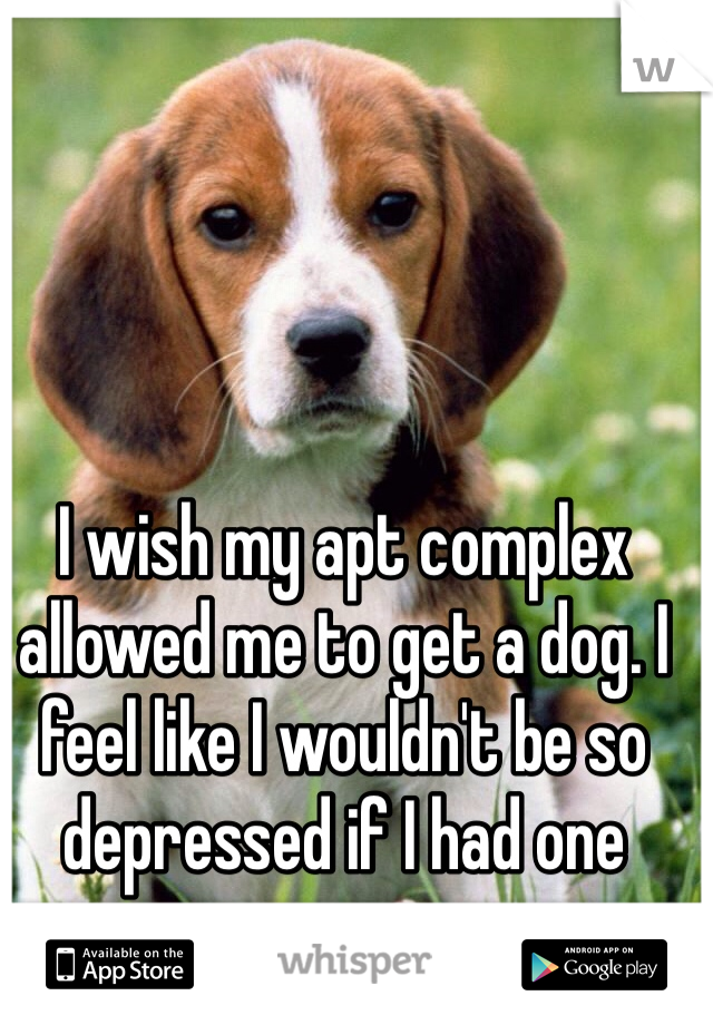 I wish my apt complex allowed me to get a dog. I feel like I wouldn't be so depressed if I had one