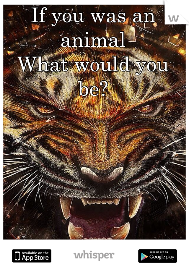 If you was an animal  What would you be?
