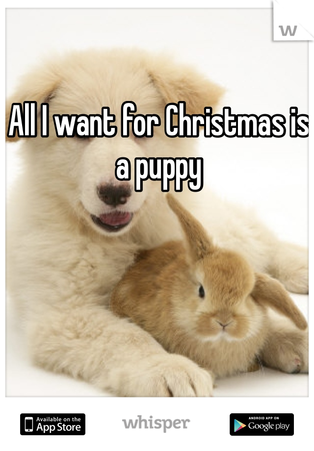 All I want for Christmas is a puppy