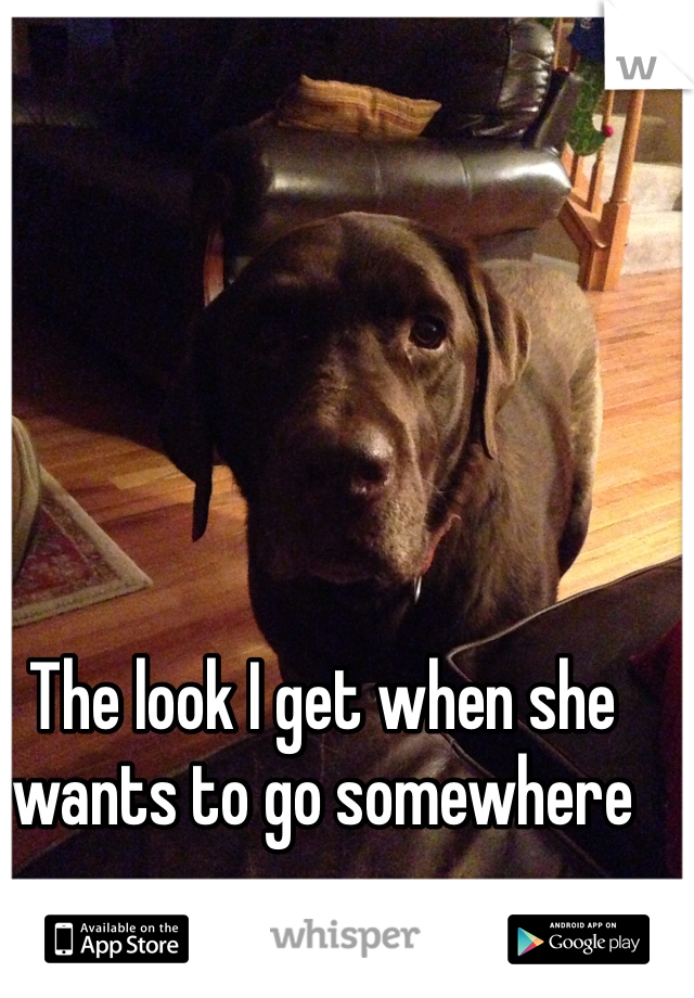 The look I get when she wants to go somewhere