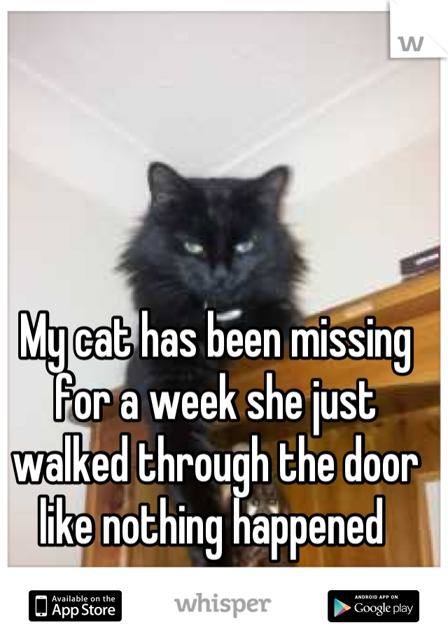 My cat has been missing for a week she just walked through the door like nothing happened