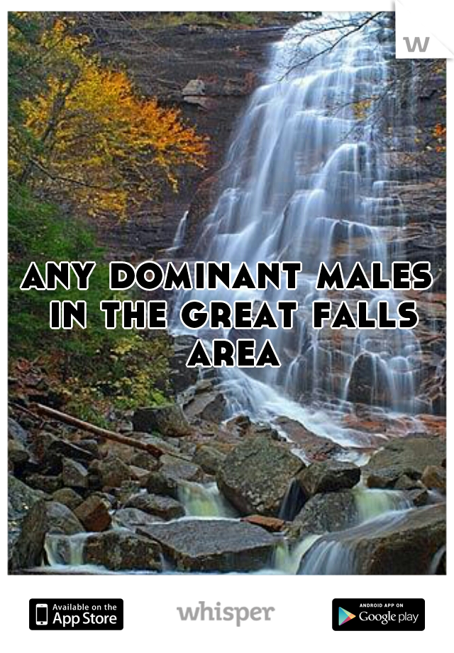any dominant males in the great falls area