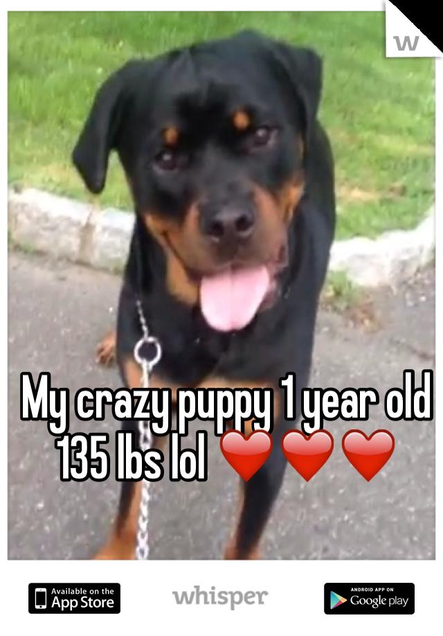 My crazy puppy 1 year old 135 lbs lol ❤️❤️❤️