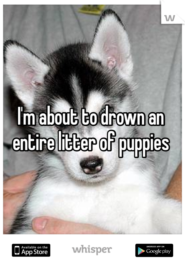 I'm about to drown an entire litter of puppies