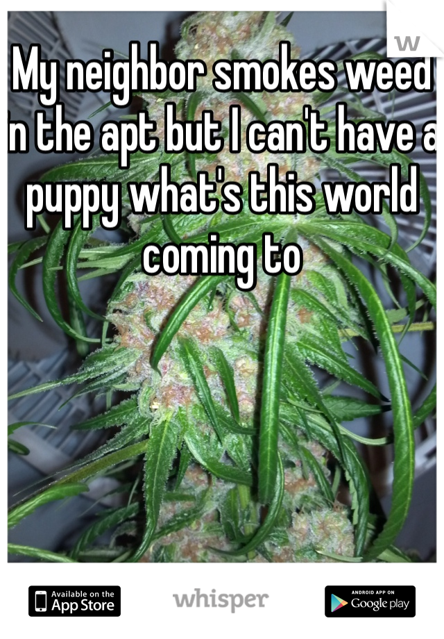My neighbor smokes weed in the apt but I can't have a puppy what's this world coming to