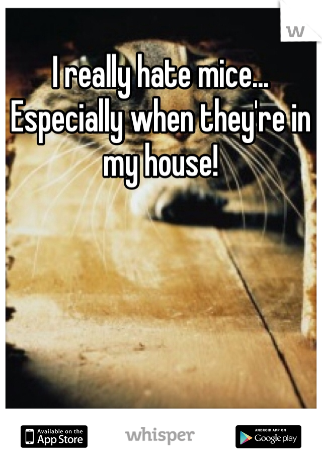 I really hate mice... Especially when they're in my house!