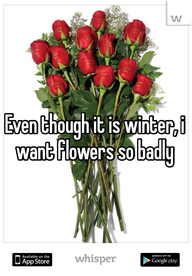 Even though it is winter, i want flowers so badly