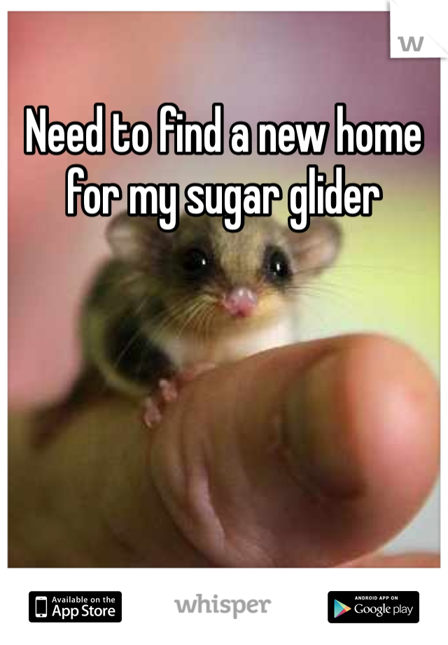 Need to find a new home for my sugar glider