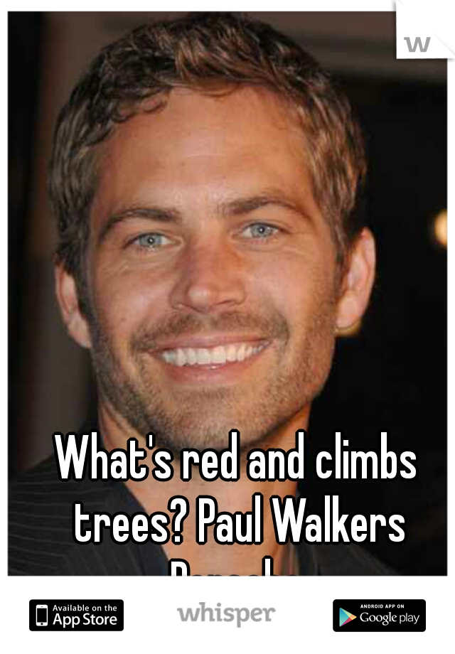 What's red and climbs trees? Paul Walkers Porsche.