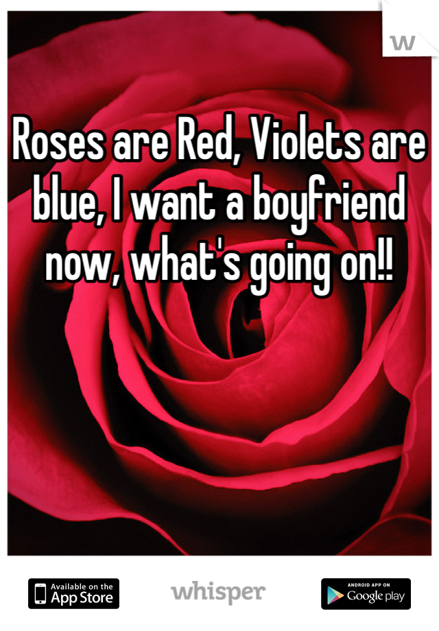 Roses are Red, Violets are blue, I want a boyfriend now, what's going on!!