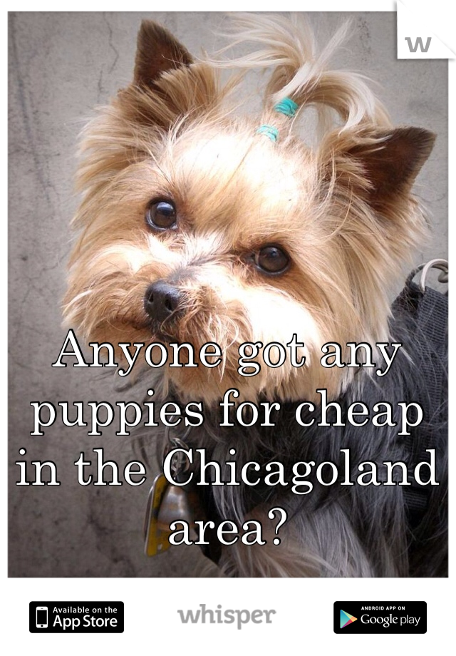 Anyone got any puppies for cheap in the Chicagoland area?