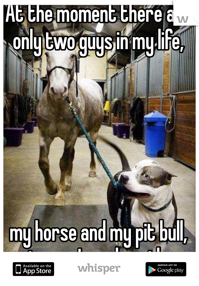 At the moment there are only two guys in my life,        my horse and my pit bull, not sure I need another.