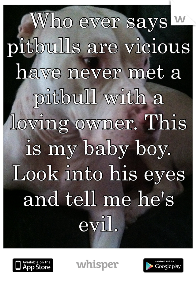 Who ever says pitbulls are vicious have never met a pitbull with a loving owner. This is my baby boy. Look into his eyes and tell me he's evil.