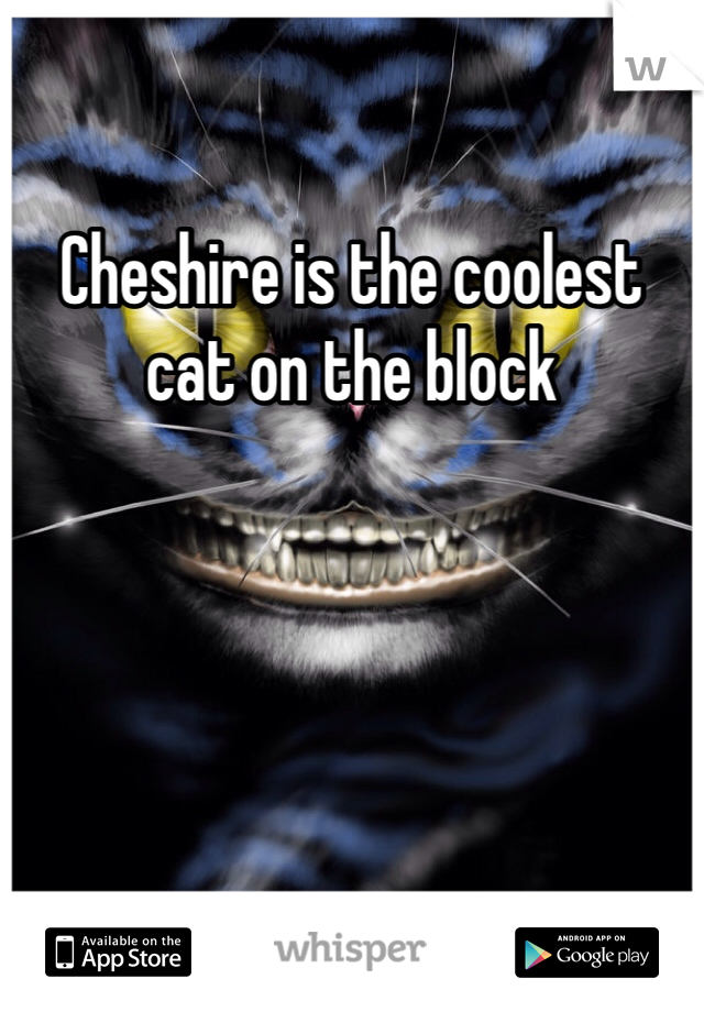 Cheshire is the coolest cat on the block