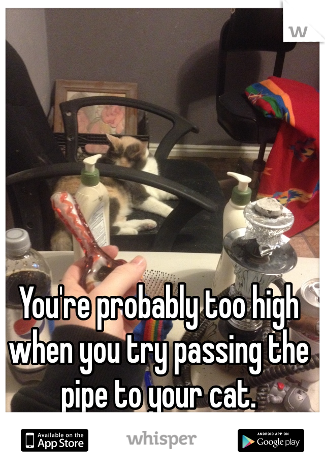 You're probably too high when you try passing the pipe to your cat.