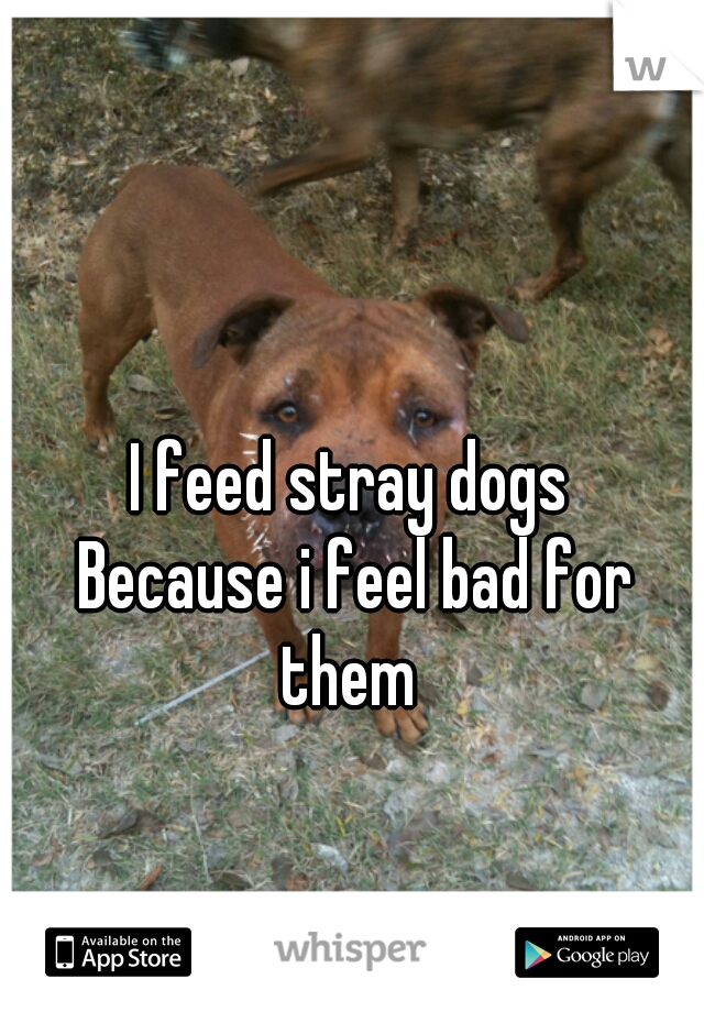 I feed stray dogs  Because i feel bad for them