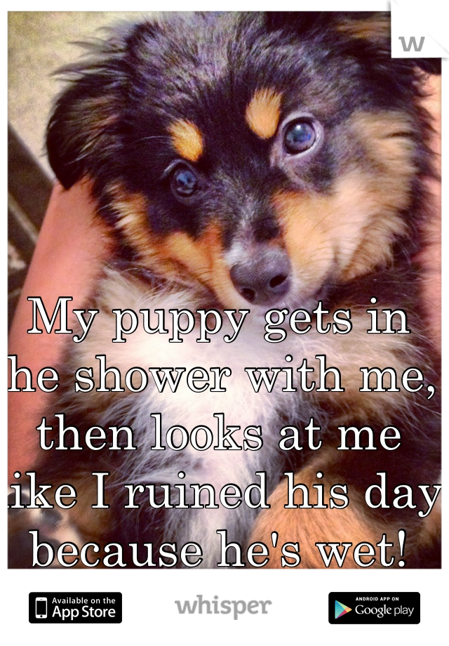 My puppy gets in the shower with me, then looks at me like I ruined his day because he's wet! That him!