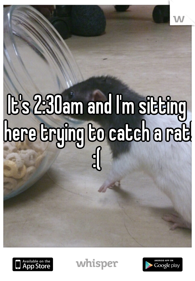It's 2:30am and I'm sitting here trying to catch a rat! :(