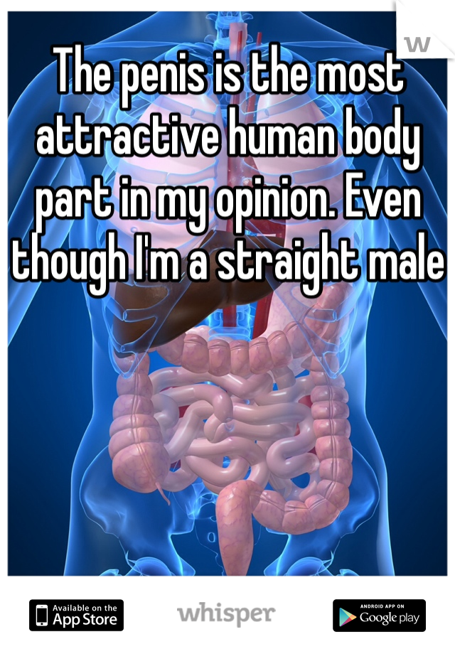 The penis is the most attractive human body part in my opinion. Even though I'm a straight male