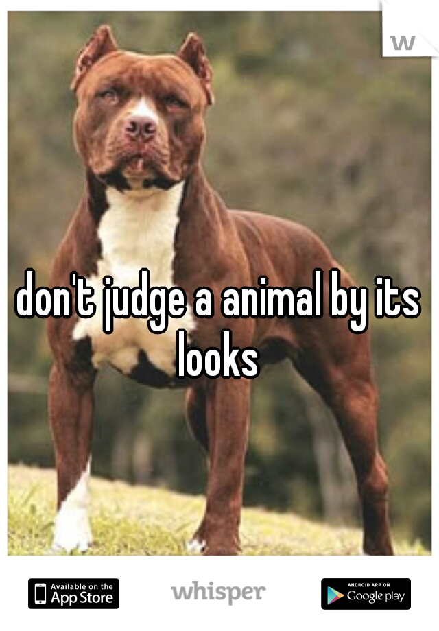 don't judge a animal by its looks