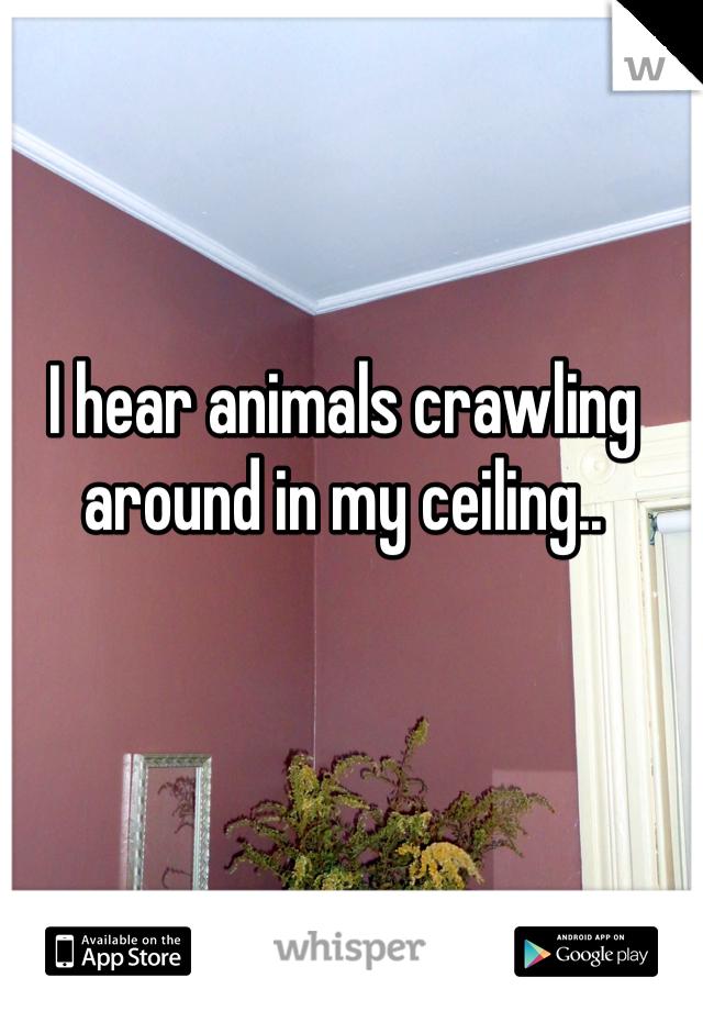 I hear animals crawling around in my ceiling..