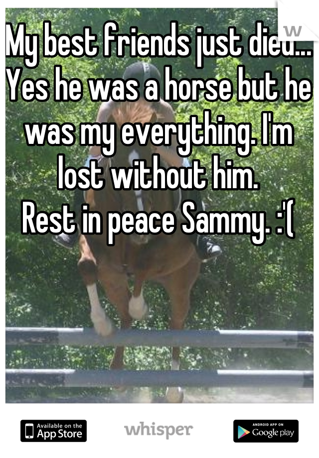 My best friends just died... Yes he was a horse but he was my everything. I'm lost without him.  Rest in peace Sammy. :'(
