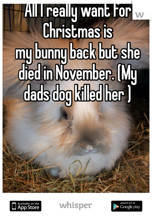 All I really want for Christmas is     my bunny back but she died in November. (My  dads dog killed her )
