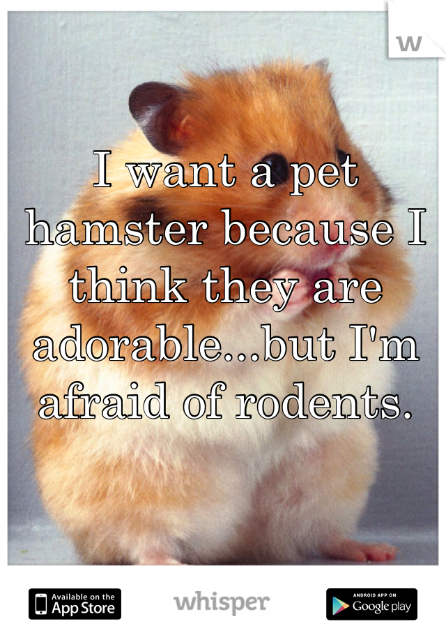 I want a pet hamster because I think they are adorable...but I'm afraid of rodents.