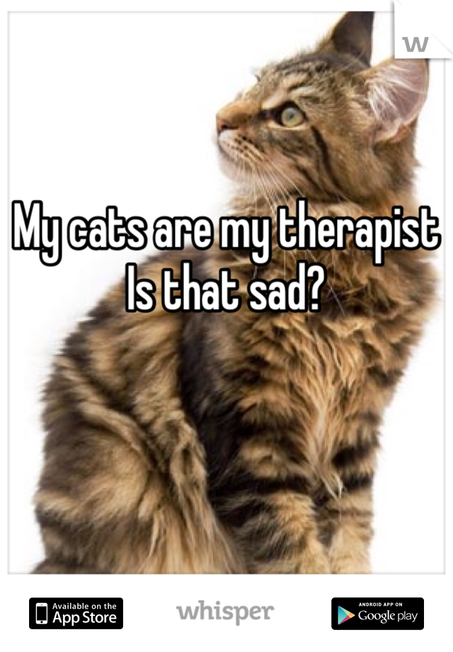 My cats are my therapist Is that sad?