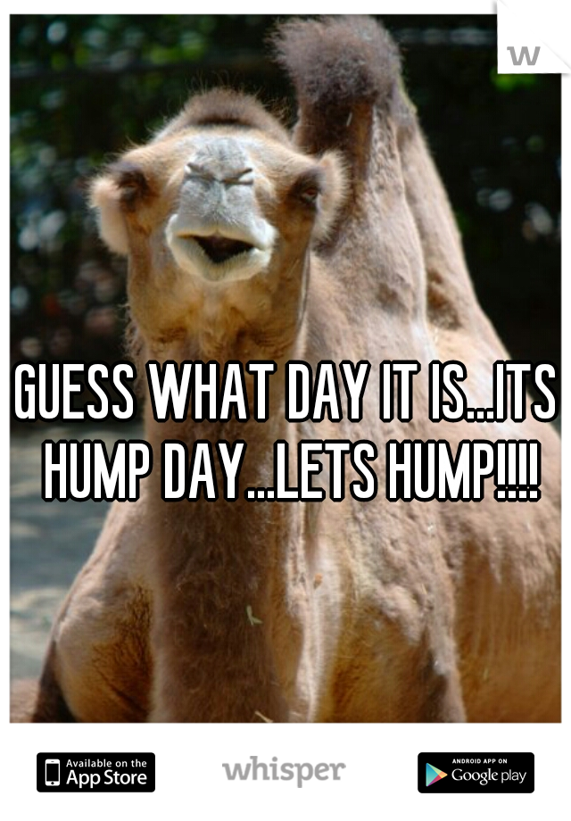GUESS WHAT DAY IT IS...ITS HUMP DAY...LETS HUMP!!!!