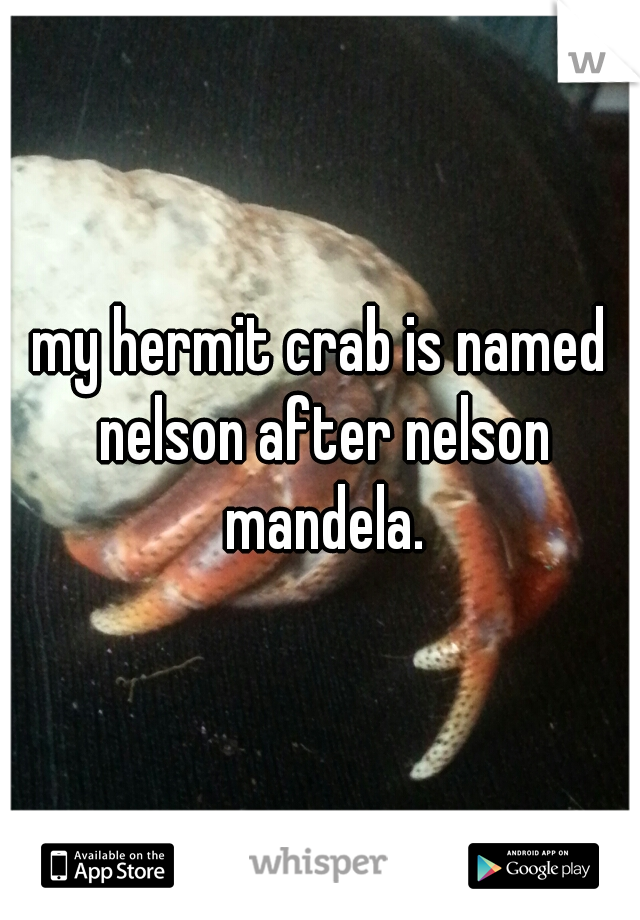 my hermit crab is named nelson after nelson mandela.