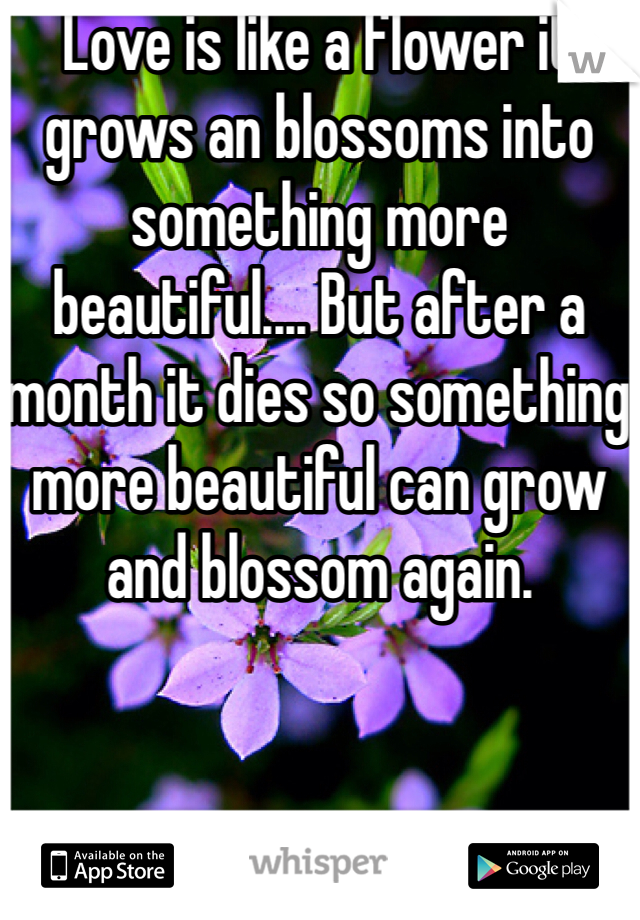 Love is like a flower it grows an blossoms into something more beautiful.... But after a month it dies so something more beautiful can grow and blossom again.