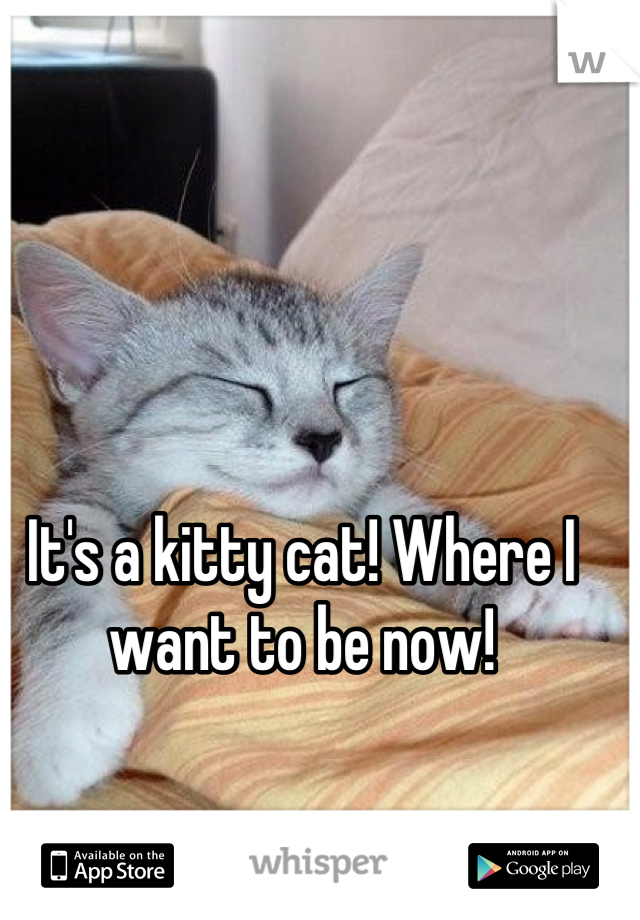 It's a kitty cat! Where I want to be now!
