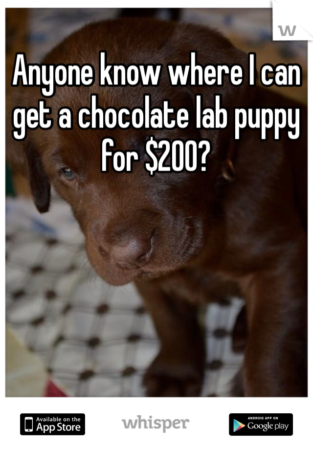 Anyone know where I can get a chocolate lab puppy for $200?