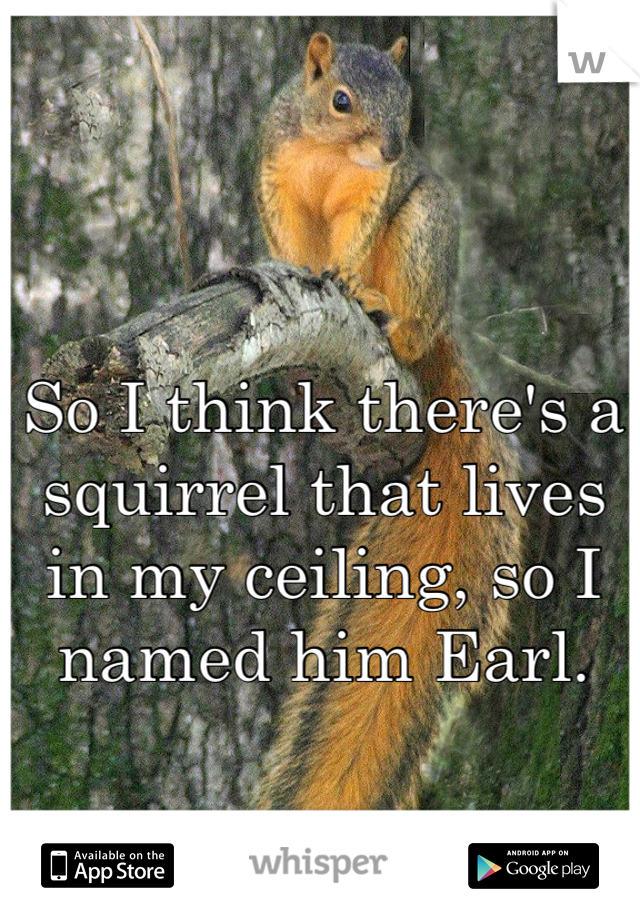 So I think there's a squirrel that lives in my ceiling, so I named him Earl.