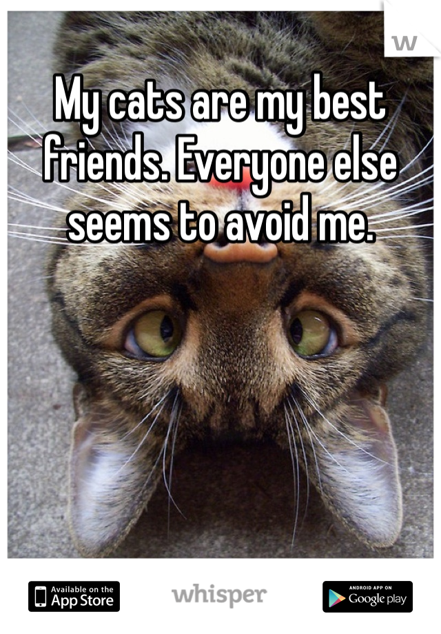 My cats are my best friends. Everyone else seems to avoid me.
