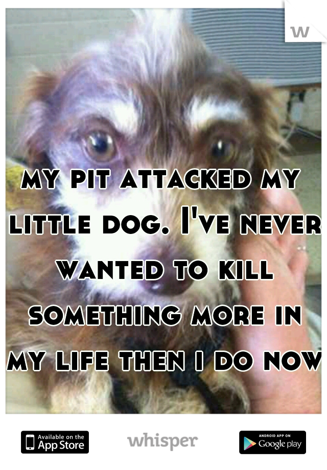 my pit attacked my little dog. I've never wanted to kill something more in my life then i do now.