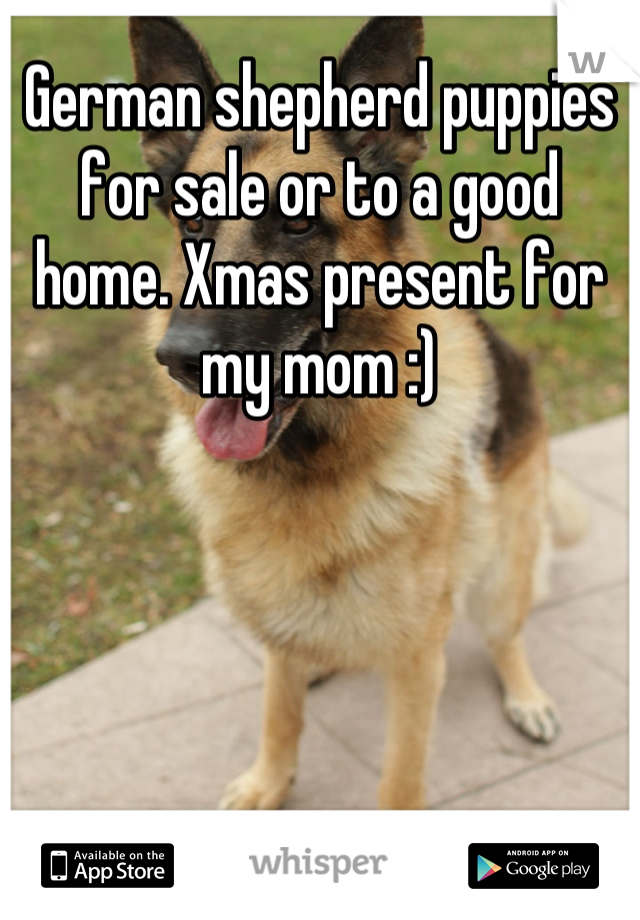 German shepherd puppies for sale or to a good home. Xmas present for my mom :)