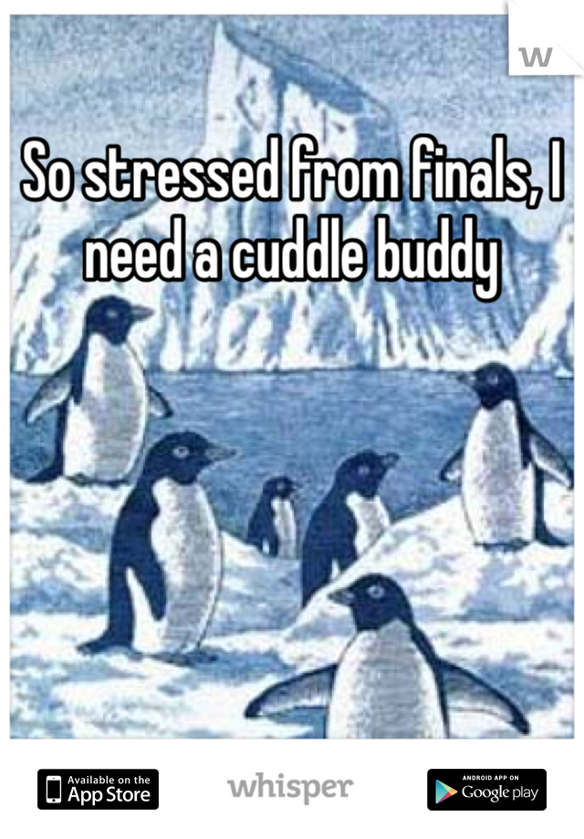 So stressed from finals, I need a cuddle buddy