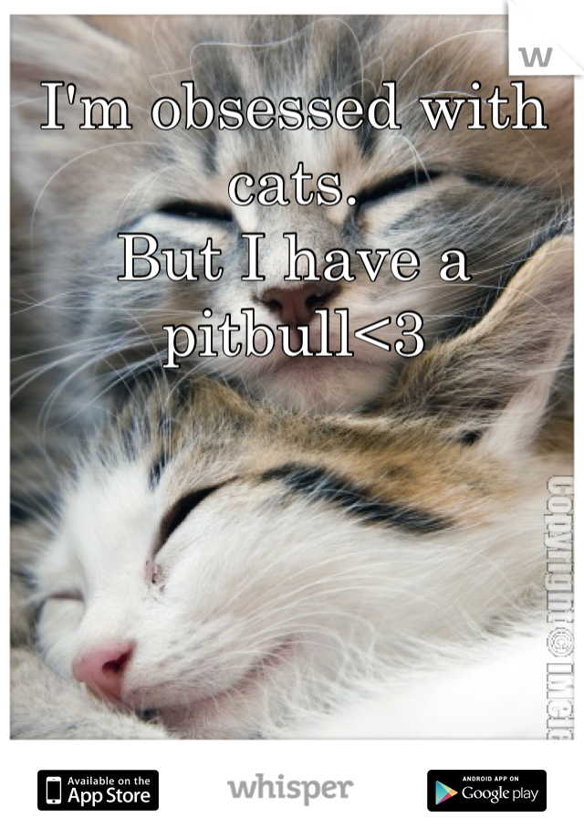 I'm obsessed with cats.  But I have a pitbull<3
